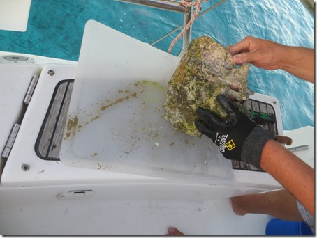 Musha et Rudder Cay (10)