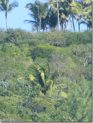 Musha et Rudder Cay (34)