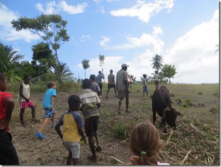 haiti (282)