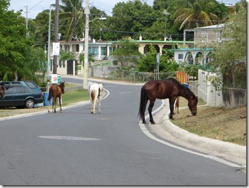 Vieques (81)