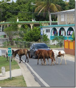 Vieques (82)