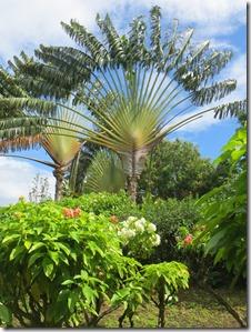 Guadeloupe (142)