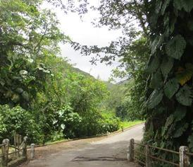 Guateloupe (120)