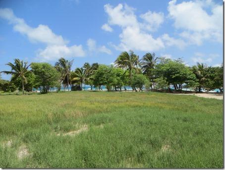 Tobago Cays (24)