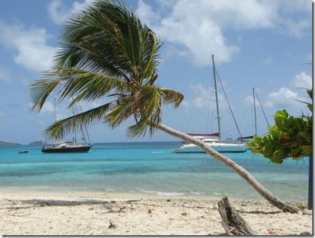Tobago Cays (30)
