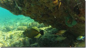 poisson-sacoche