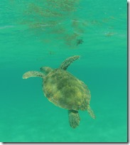 tortue (6)