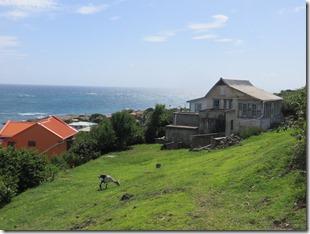 Petite Martinique (14)
