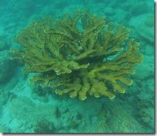 Plonge Cousteau (2)