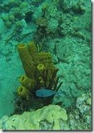 Plonge Cousteau (3)