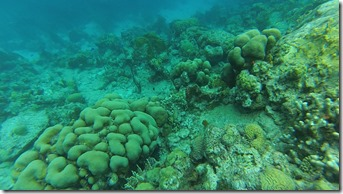 Plonge Cousteau (4)