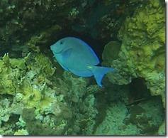 Plonge Cousteau (7)