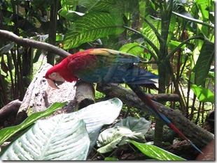 Zoo Parc des Mamelles (15)