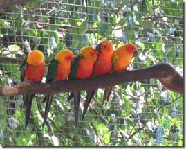 Zoo Parc des Mamelles (17)
