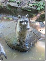 Zoo Parc des Mamelles (5)