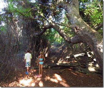 Buck Island (14)