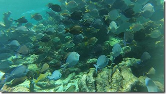 Plongee Buck Island (11)