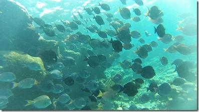 Plongee Buck Island (12)