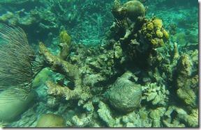 Plongee Buck Island (1)