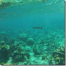 Plongee Buck Island (5)
