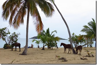 Vieques Sun Bay (19)