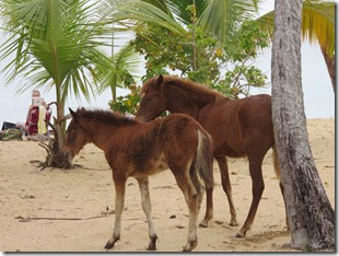 Vieques Sun Bay (20)