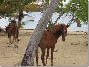 Vieques Sun Bay (21)