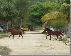 Vieques Sun Bay (23)