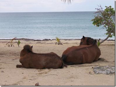 Vieques Sun Bay (27)