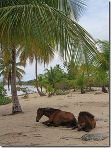 Vieques Sun Bay (31)