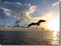 Great Guana Cay (20)