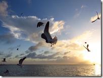 Great Guana Cay (21)