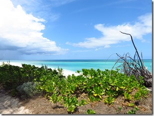 Green Turtle Cay (65)