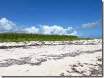 Green Turtle Cay (6)