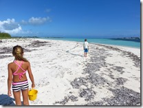 Green Turtle Cay (7)