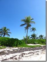 Tahiti Beach (15)