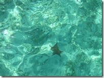Tahiti Beach (24)