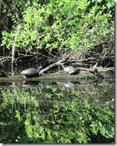 Dismal Swamp (4)