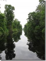 Dismal Swamp (55)