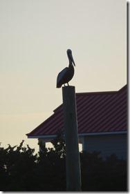 Ocracoke NC (26)